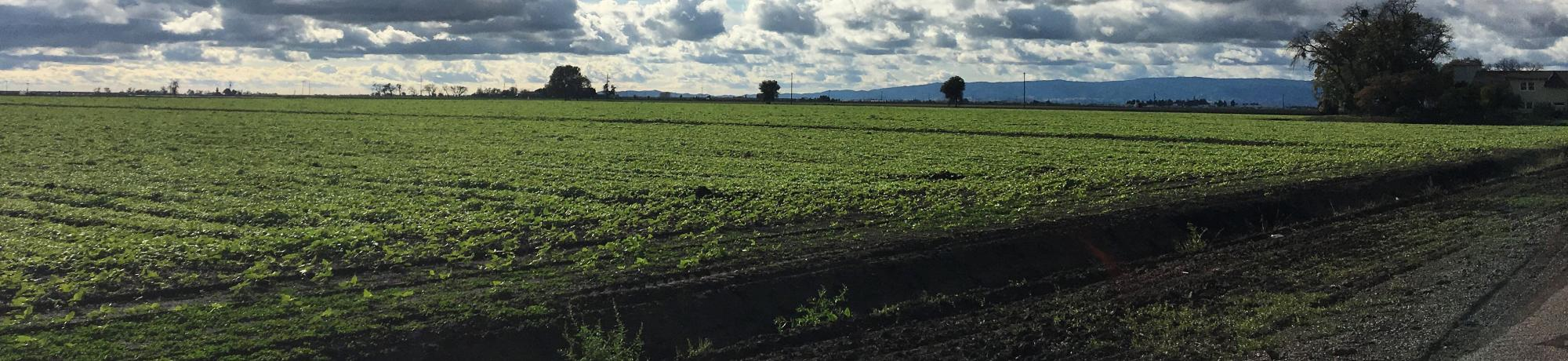 Agricultural fields in Davis, CA